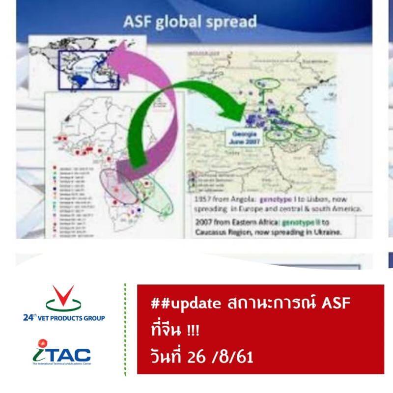 สถานการณ์ASF ที่จีน วันที่ 26 สิงหาคม 2561