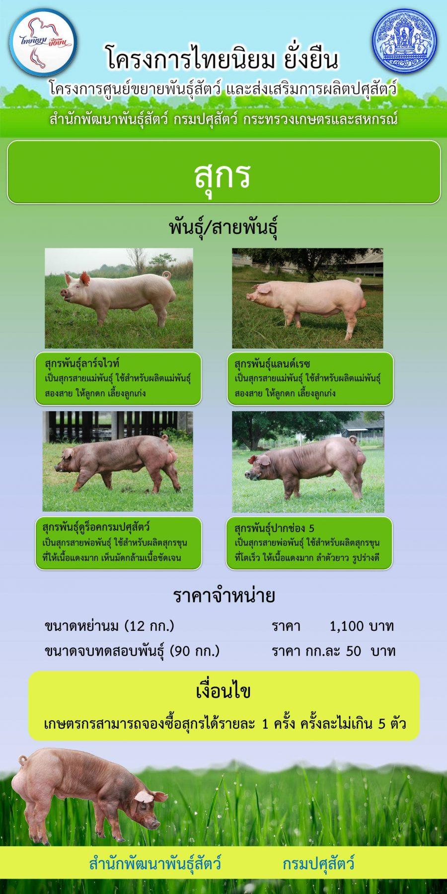 ราคาจำหน่ายพันธุ์สุกร ของ ศูนย์วิจัยและพัฒนาสุกร ตามโครงการไทยนิยม ยั่งยืน
